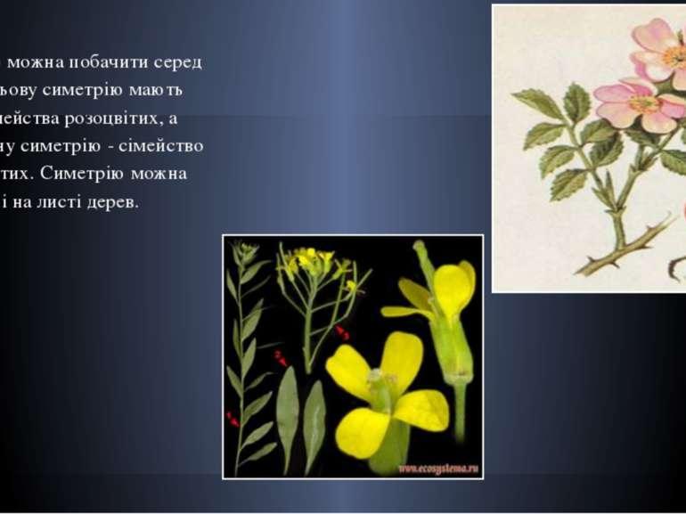 Симетрію можна побачити серед квітів. Осьову симетрію мають квітки сімейства ...