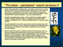"""""""Рослини – рятівники"""" нашої місцевості Лопух. Його корені містять ефірне масл..."""