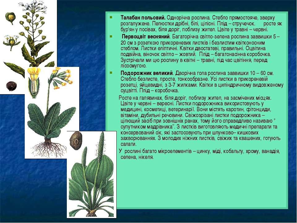 Талабан польовий. Однорічна рослина. Стебло прямостояче, зверху розгалужене. ...