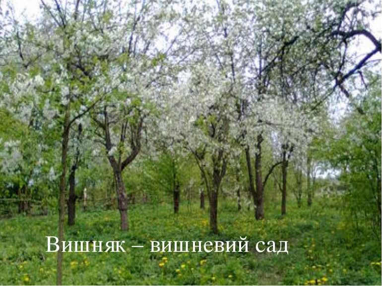 Вишняк – вишневий сад