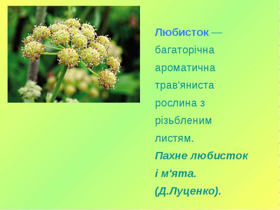 Любисток — багаторічна ароматична трав'яниста рослина з різьбленим листям. Па...