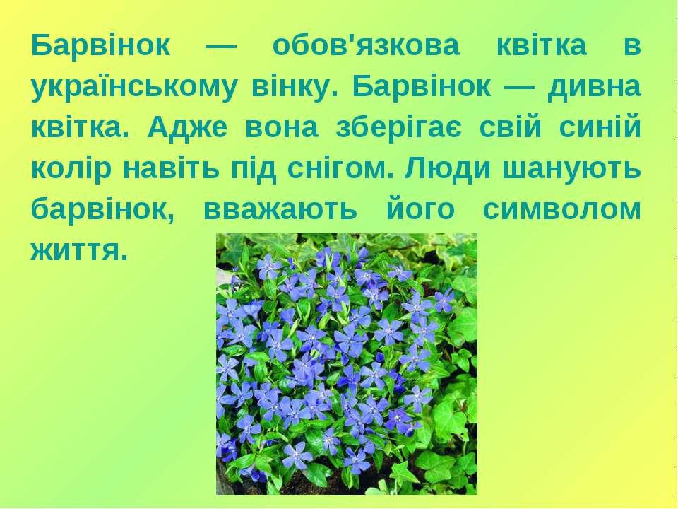 Барвінок — обов'язкова квітка в українському вінку. Барвінок — дивна квітка. ...