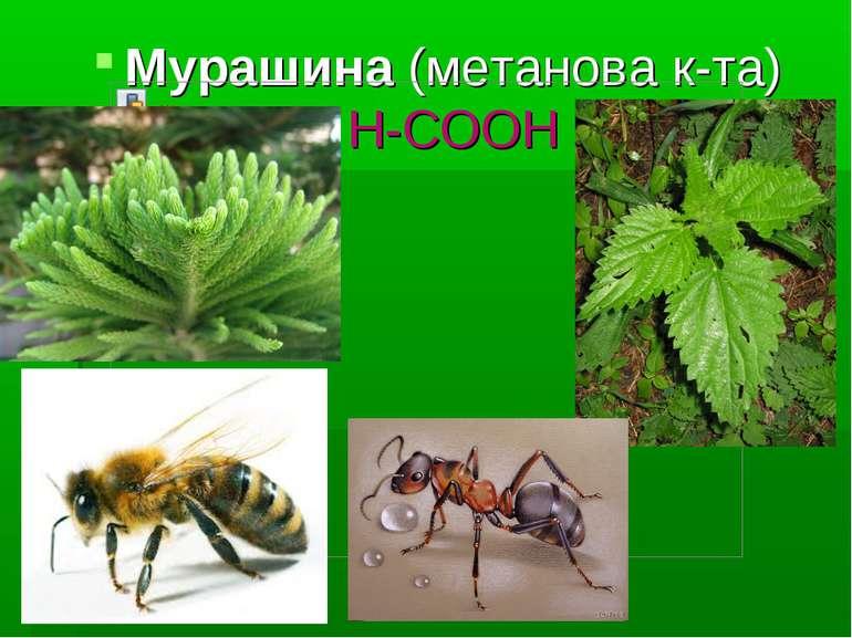 Мурашина (метанова к-та) Н-СООН