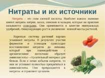 Нитраты – это соли азотной кислоты. Наиболее важное значение имеют нитраты на...