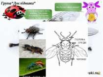 Яку будову мають комахи?. - Усі комахи мають шість кінцівок. Тіло комах склад...