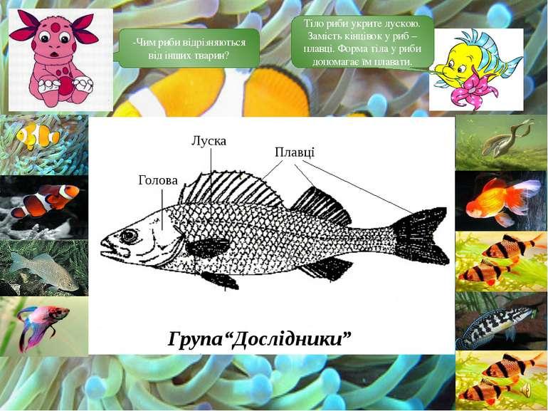 -Чим риби відрізняються від інших тварин? Тіло риби укрите лускою. Замість кі...
