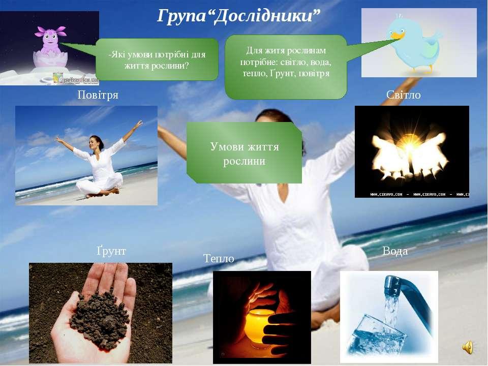 Умови життя рослини Ґрунт Тепло Вода Світло Повітря -Які умови потрібні для ж...