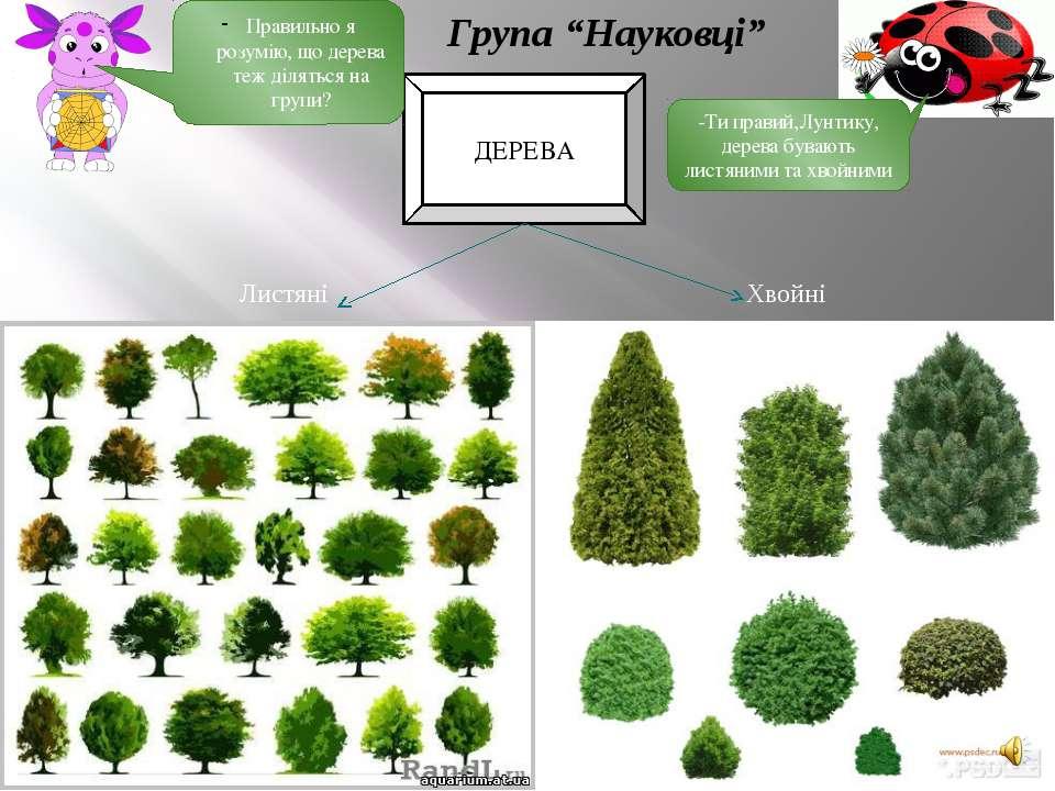 ДЕРЕВА Листяні Хвойні Правильно я розумію, що дерева теж діляться на групи? -...