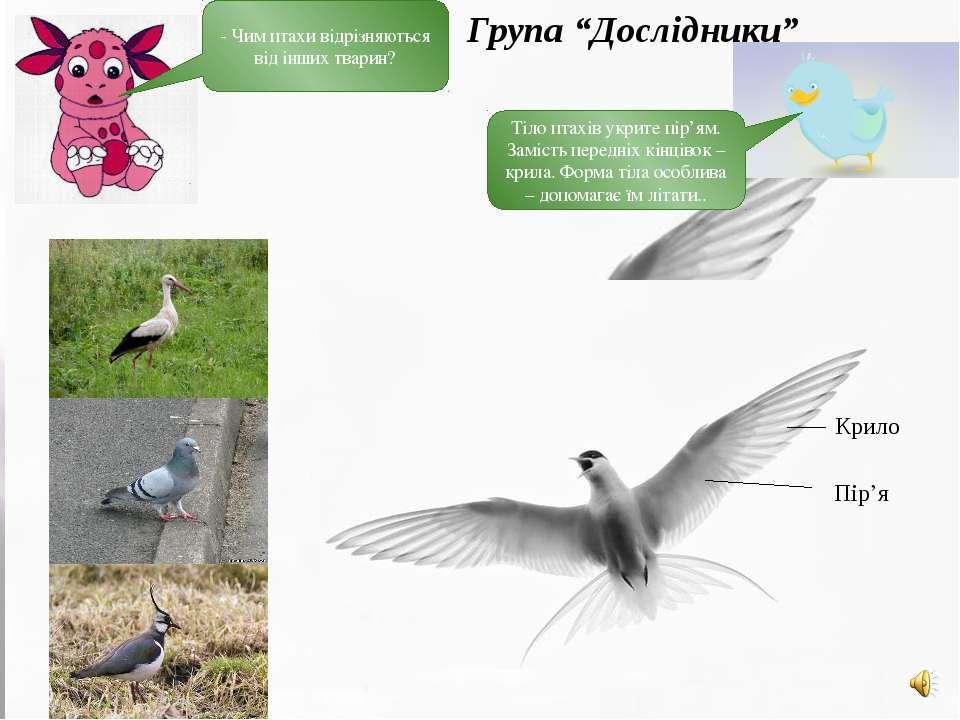 Тіло птахів укрите пір'ям. Замість передніх кінцівок – крила. Форма тіла особ...