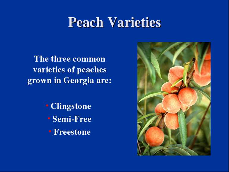 Peach Varieties The three common varieties of peaches grown in Georgia are: C...