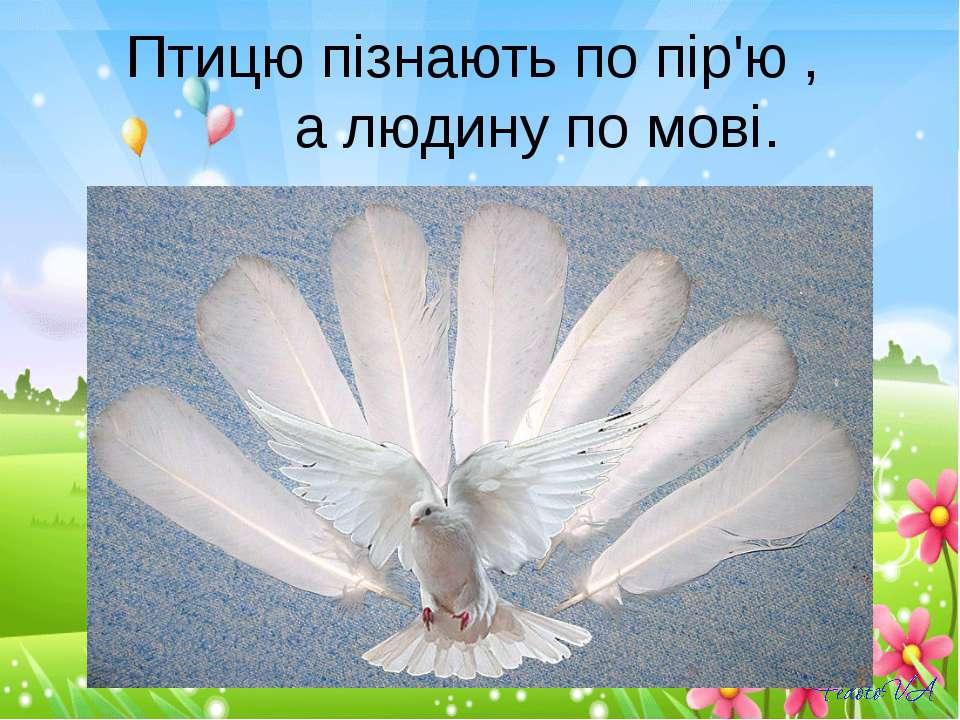 Птицю пізнають по пір'ю , а людину по мові.