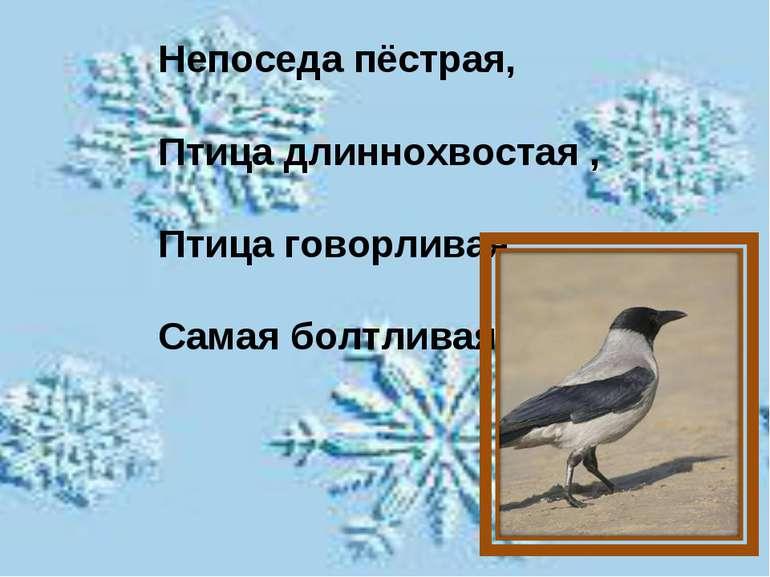Непоседа пёстрая, Птица длиннохвостая , Птица говорливая , Самая болтливая .