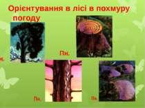 Орієнтування в лісі в похмуру погоду Пн. Пн. Пн. Пн.
