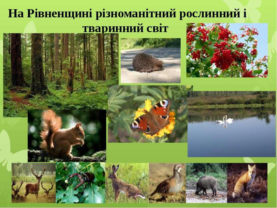 На Рівненщині різноманітний рослинний і тваринний світ