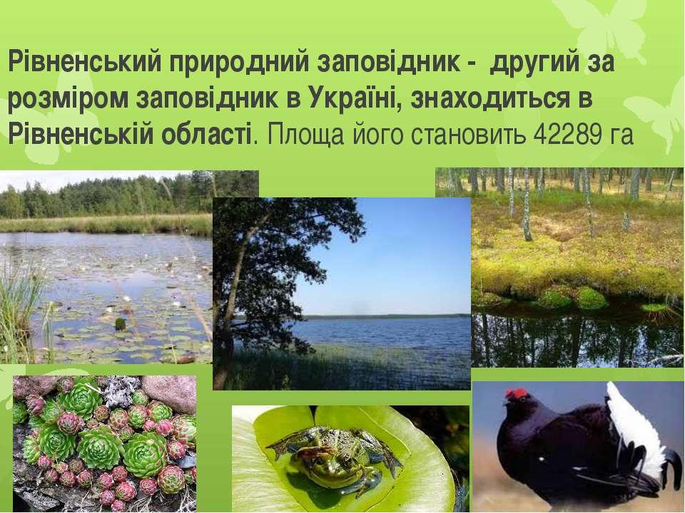 Рівненський природний заповідник - другий за розміром заповідник в Україні, з...
