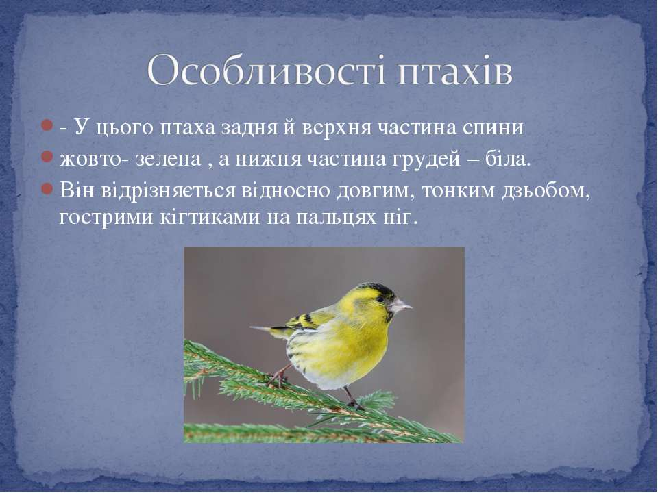 - У цього птаха задня й верхня частина спини жовто- зелена , а нижня частина ...