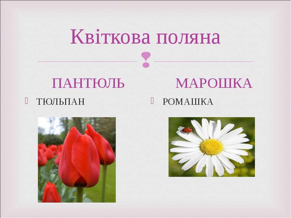 Квіткова поляна ПАНТЮЛЬ ТЮЛЬПАН МАРОШКА РОМАШКА