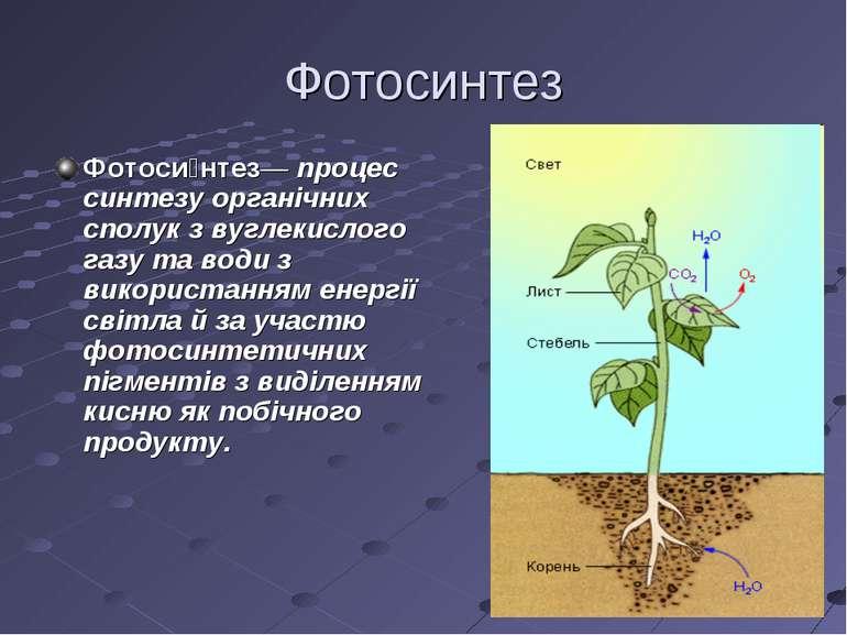 Фотосинтез Фотоси нтез— процес синтезу органічних сполук з вуглекислого газу ...