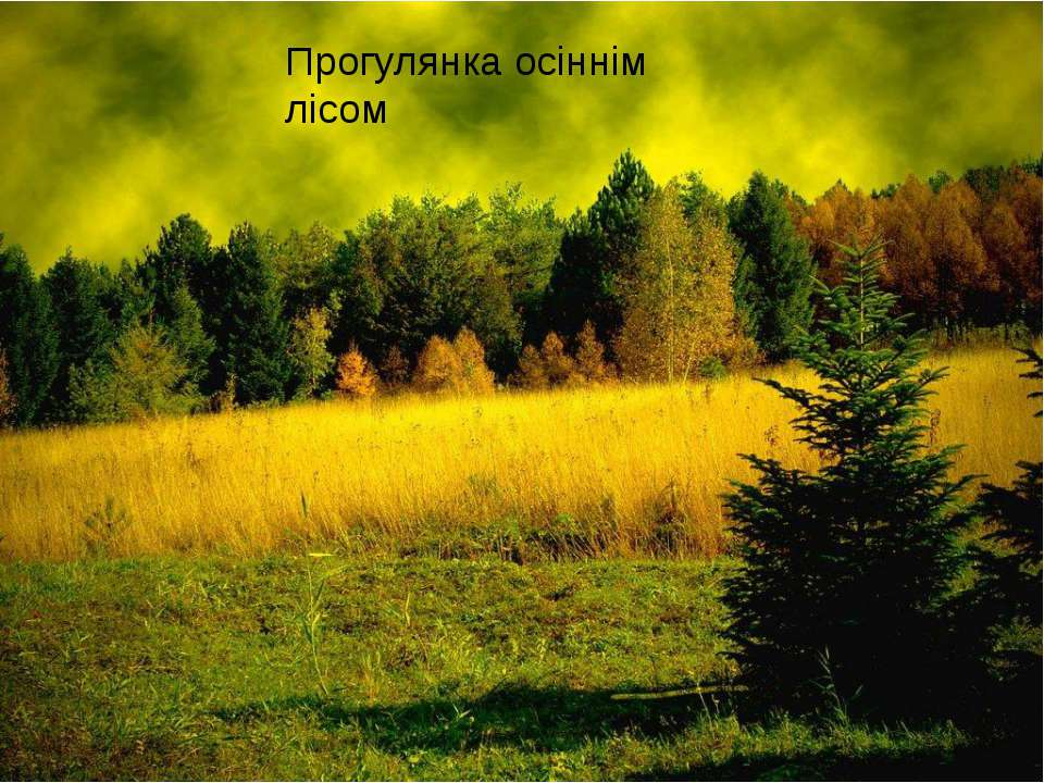 Прогулянка осіннім лісом