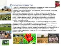 Сільське господарство У структурі сільського господарства переважає тваринниц...