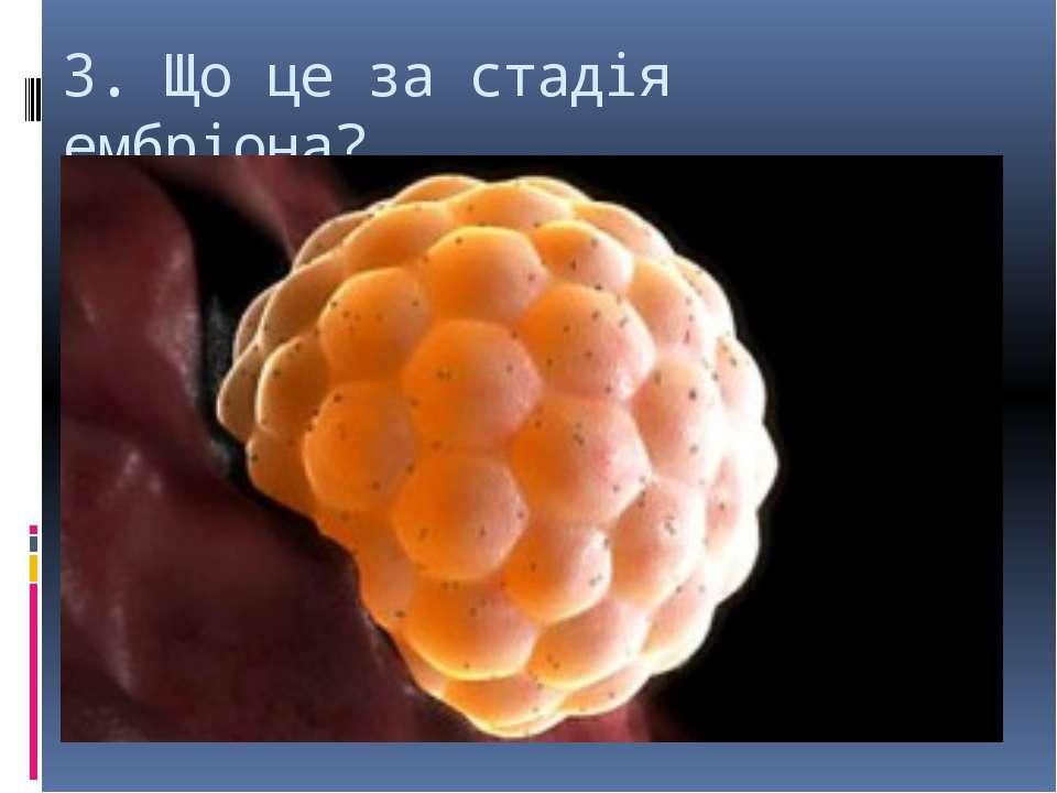 3. Що це за стадія ембріона?