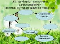 Життєвий цикл якої рослини запропонований? Які етапи життєвого циклу не позна...