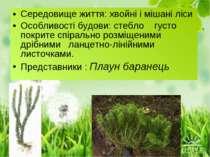 Середовище життя: хвойні і мішані ліси Особливості будови: стебло густо покри...