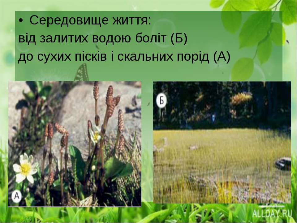 Середовище життя: від залитих водою боліт (Б) до сухих пісків і скальних порі...