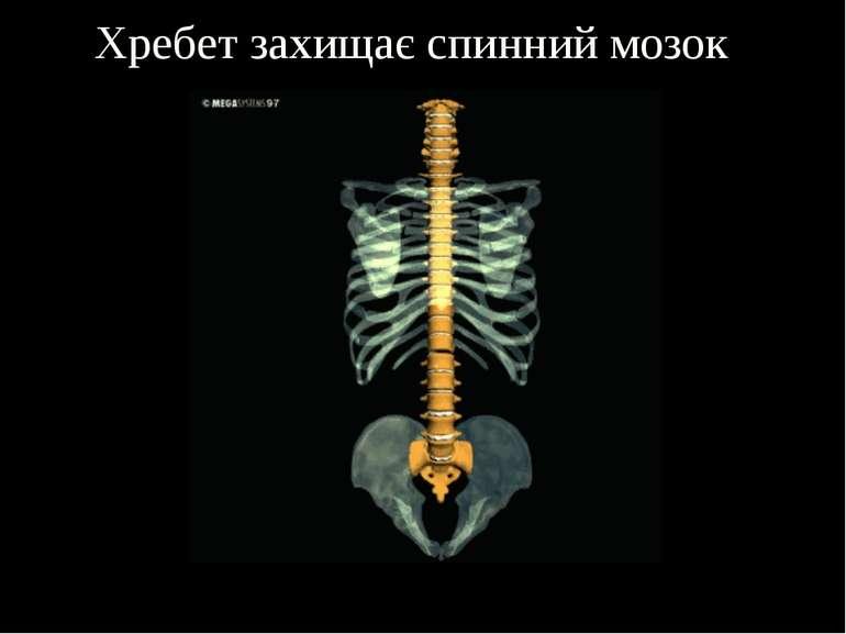 Хребет захищає спинний мозок