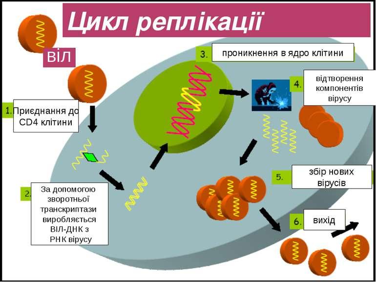 Цикл реплікації віл Приєднання до CD4 клітини За допомогою зворотньої транскр...
