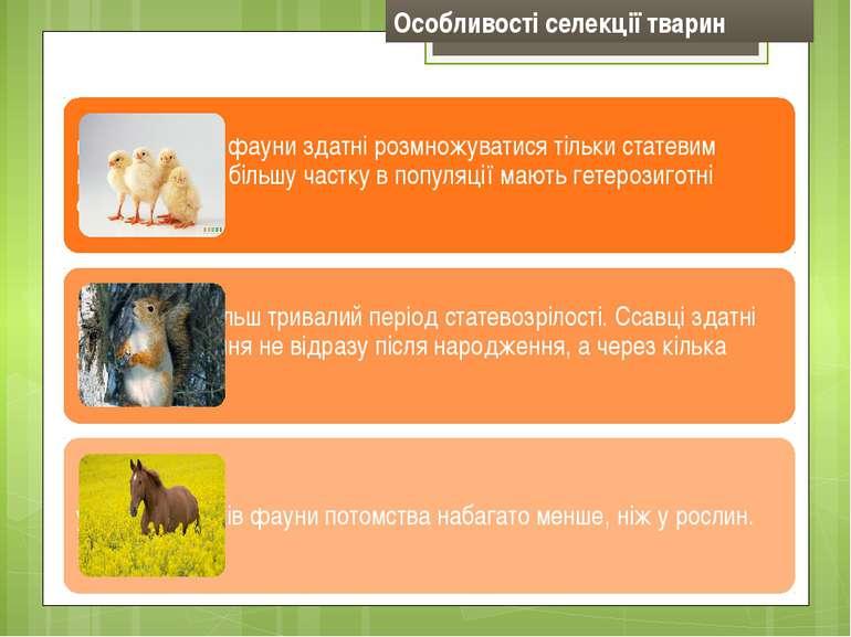 Особливості селекції тварин