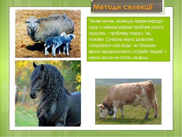 Таким чином, селекція тварин вирішує одну з найважливіших проблем усього людс...