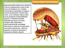 Широкомасштабне вивільнення в довкілля генетично модифікованих сортів рослин ...