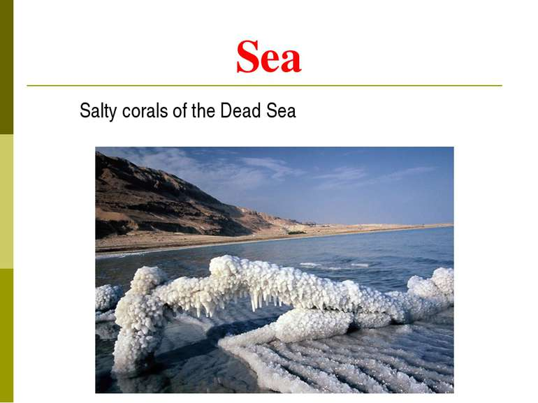 Sea Salty corals of the Dead Sea