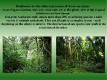 Rainforests are the oldest expressions of life on our planet. According to sc...