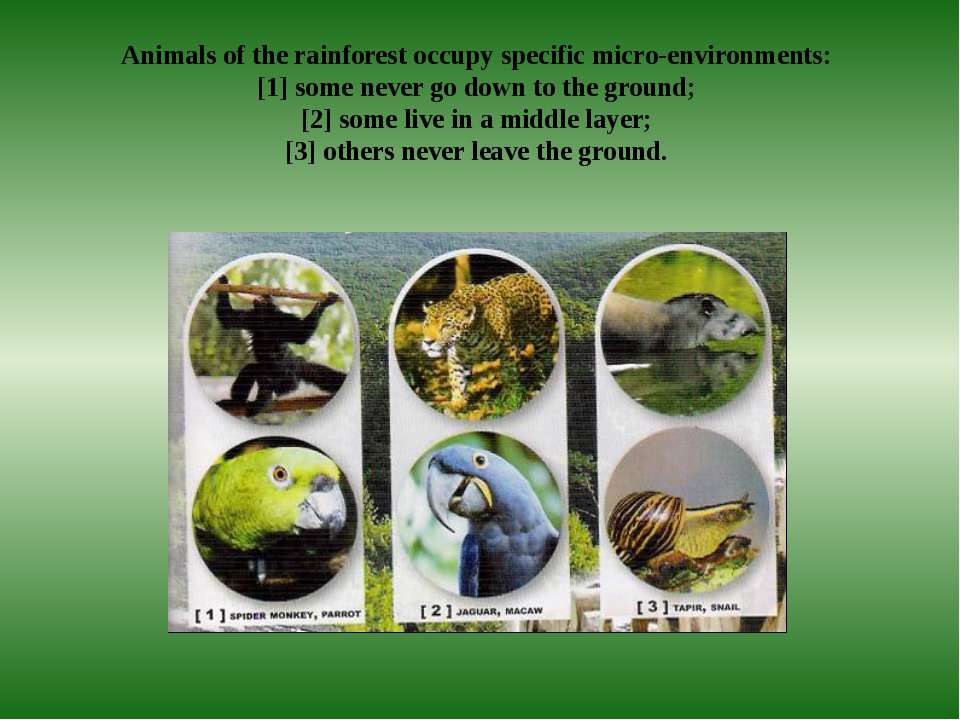 Animals of the rainforest occupy specific micro-environments: [1] some never ...