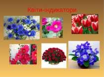 Квіти-індикатори