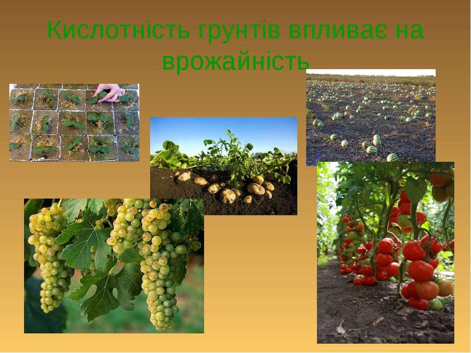 Кислотність грунтів впливає на врожайність