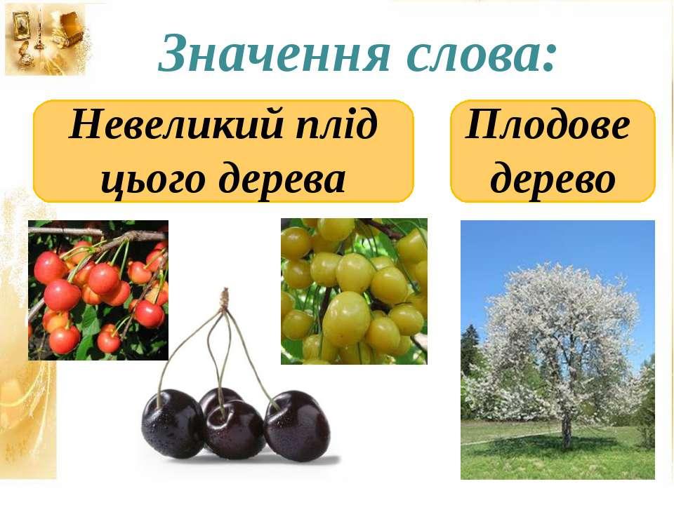 Значення слова: Плодове дерево Невеликий плід цього дерева