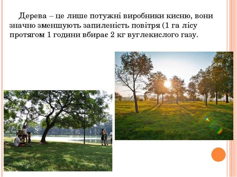 Дерева – це лише потужні виробники кисню, вони значно зменшують запиленість п...