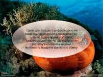 Однак для більшості рифоутворюючих видів їжа, що надходить від зооксантел, - ...