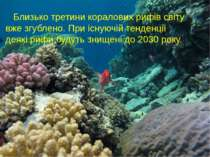 Близько третини коралових рифів світу вже згублено. При існуючій тенденції де...