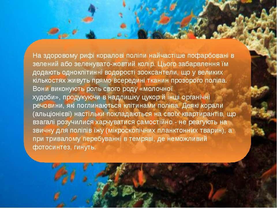 На здоровому рифі коралові поліпи найчастіше пофарбовані в зелений або зелену...