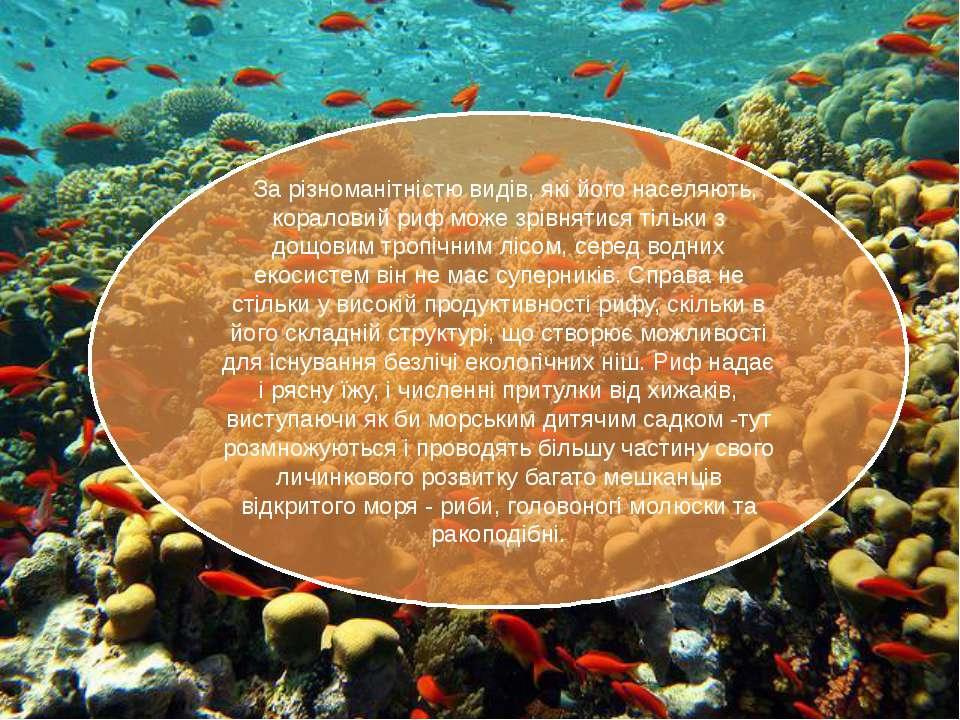 За різноманітністю видів, які його населяють, кораловий риф може зрівнятися ...
