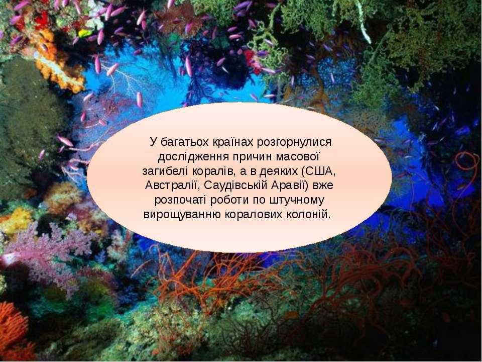 У багатьох країнах розгорнулися дослідження причин масової загибелі коралів, ...