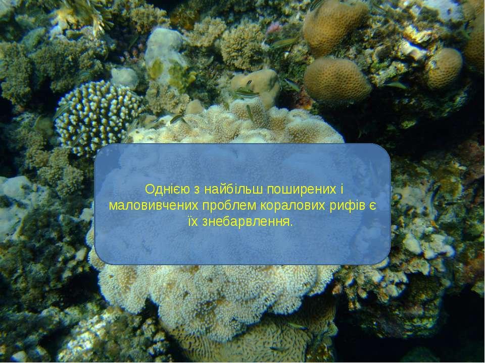 Однією з найбільш поширених і маловивчених проблем коралових рифів є їх знеба...