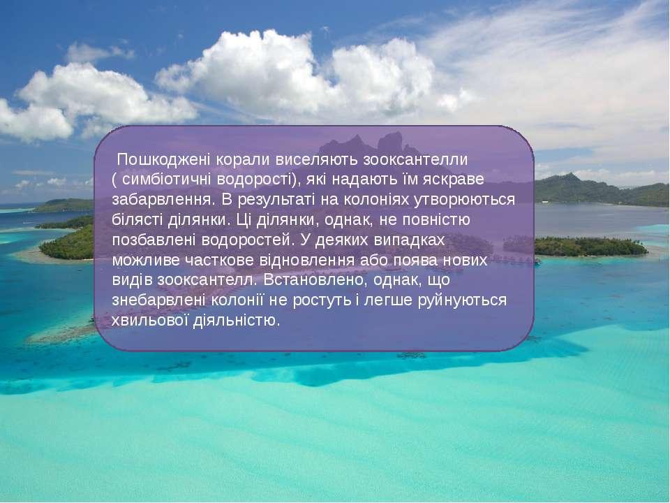 Пошкоджені корали виселяють зооксантелли (симбіотичніводорості), які надаю...