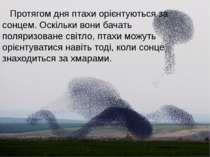 Протягом дня птахи орієнтуються за сонцем. Оскільки вони бачать поляризоване ...