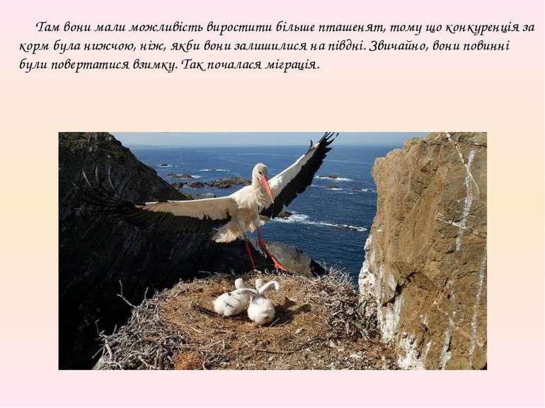 Там вони мали можливість виростити більше пташенят, тому що конкуренція за ко...