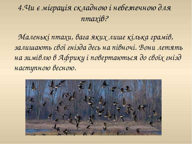 4.Чи є міграція складною і небезпечною для птахів? Маленькі птахи, вага яких ...